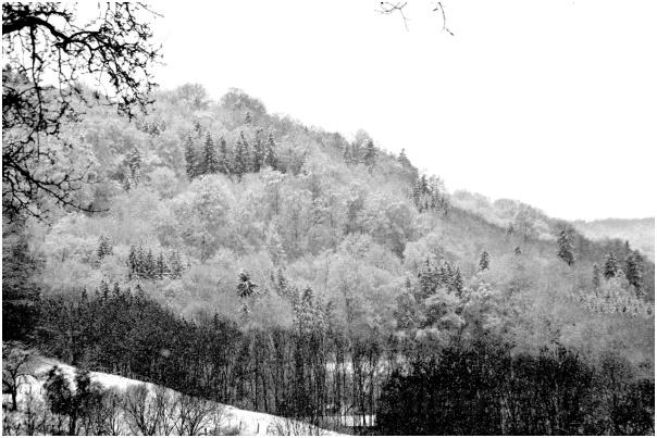 ... und der Wald steht weiß und schweiget.