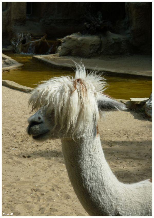 Besoin d'un coiffeur ? / A haircut ?