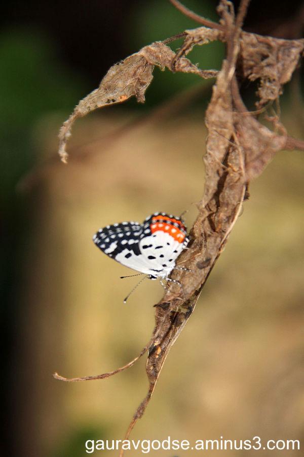 Butterfly !!!