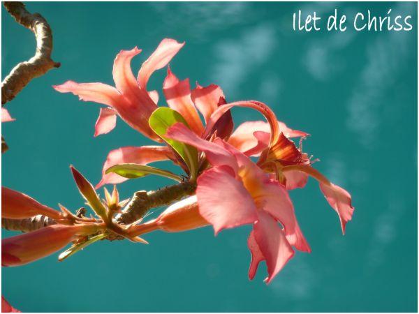 Une fleur rose sur fond de bleu piscine