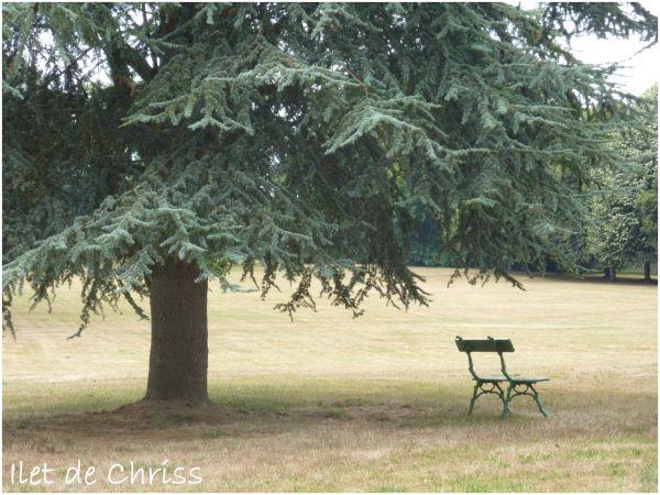 Un arbre et un banc
