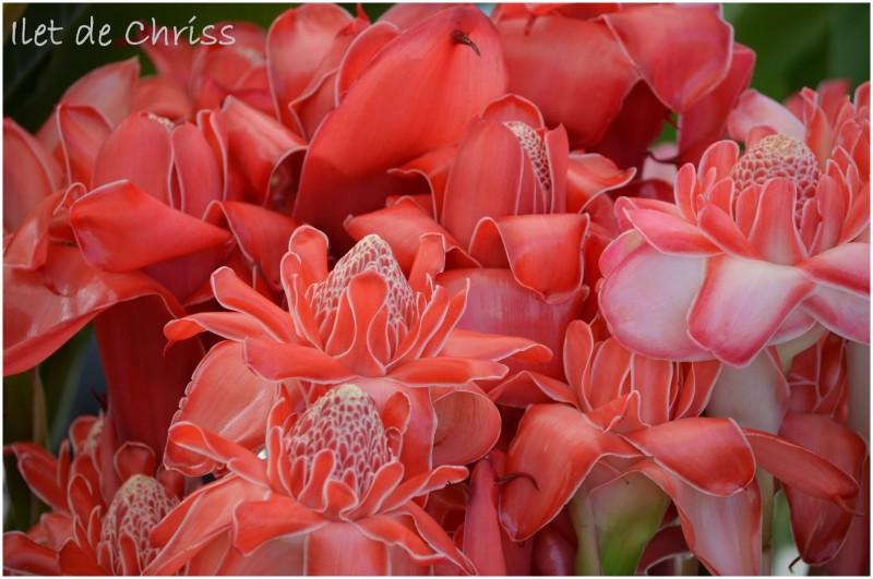 Roses de porcelaine