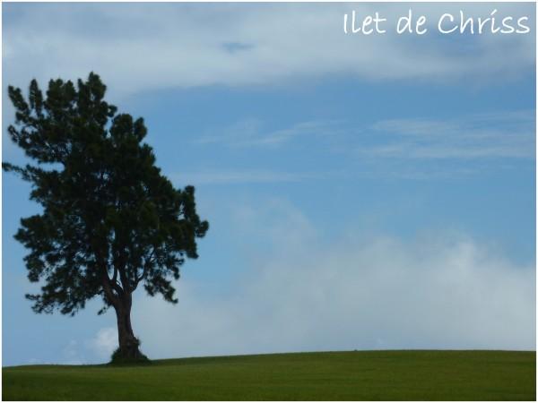L'arbre dans la prairie