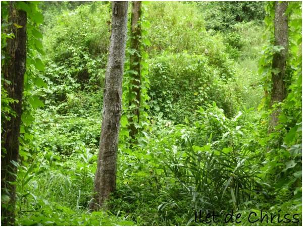 Chouchoux dans la forêt