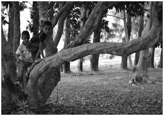 Enfants grimpant dans un arbre à leetchis