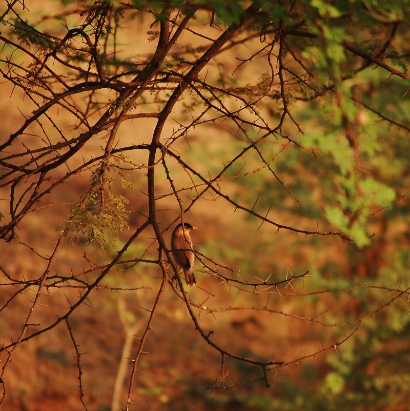 Bird sitting on a barren tree branch