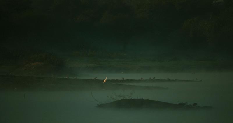 Birds on a misty morning at a lake