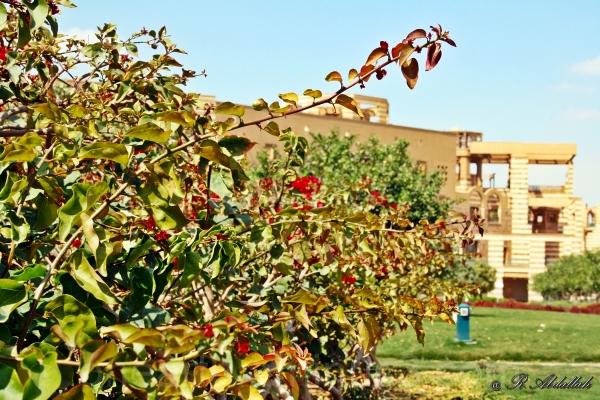 AUC Garden
