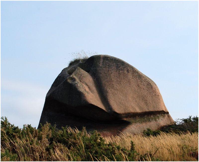 Singe de roc