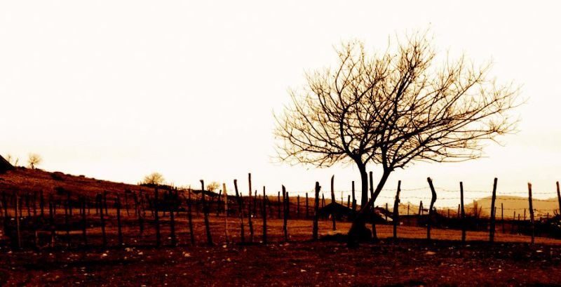 Tree in Pash village