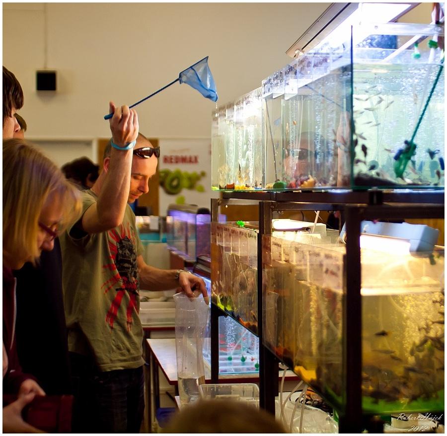 Lovec akvarijní :-)