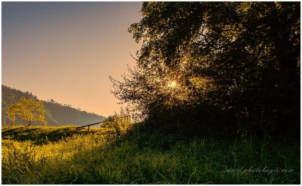 Evening sun .