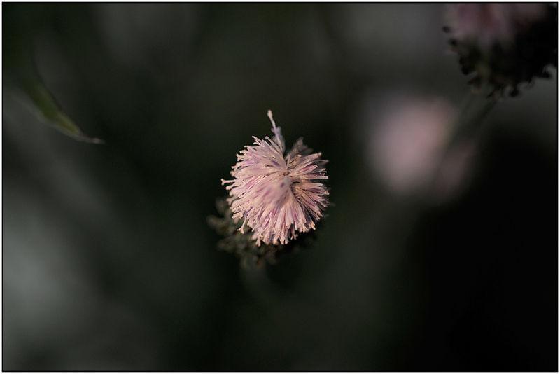 【FLOWERS】