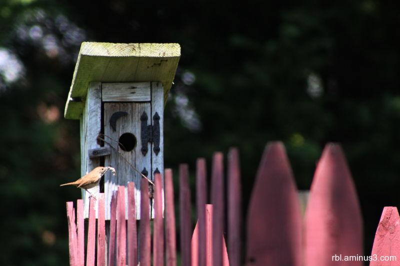 bird making a nest in a bird home