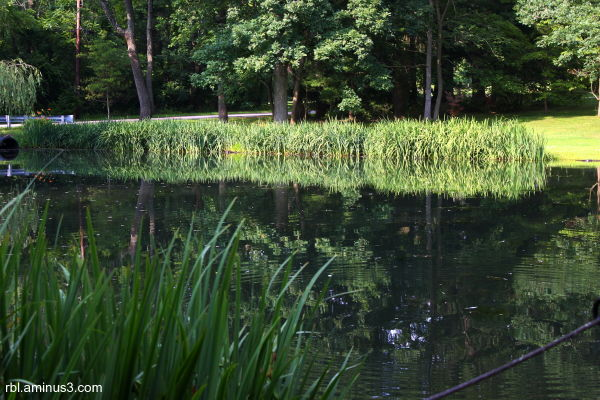 Pond at The Mill