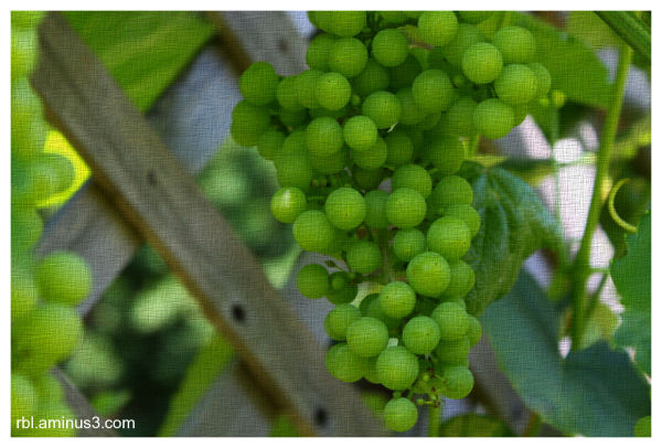 grapes with texture
