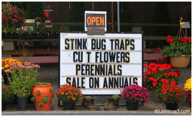 Stink Bug Traps Sign