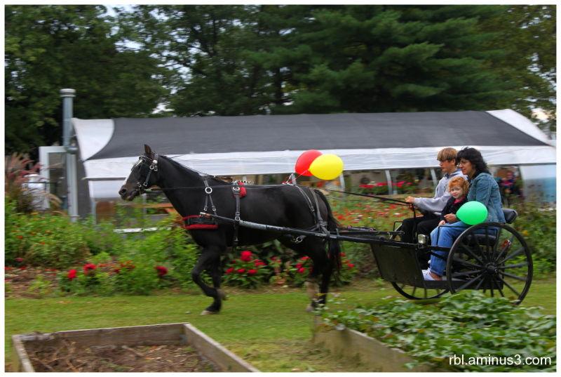 Amish pony rides