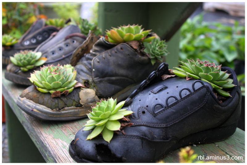 Amish Shoe Planters