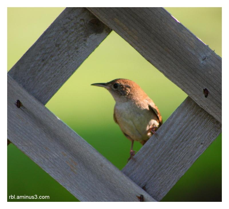 bird on lattice