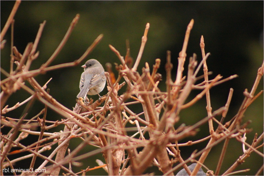 perched bird on branches