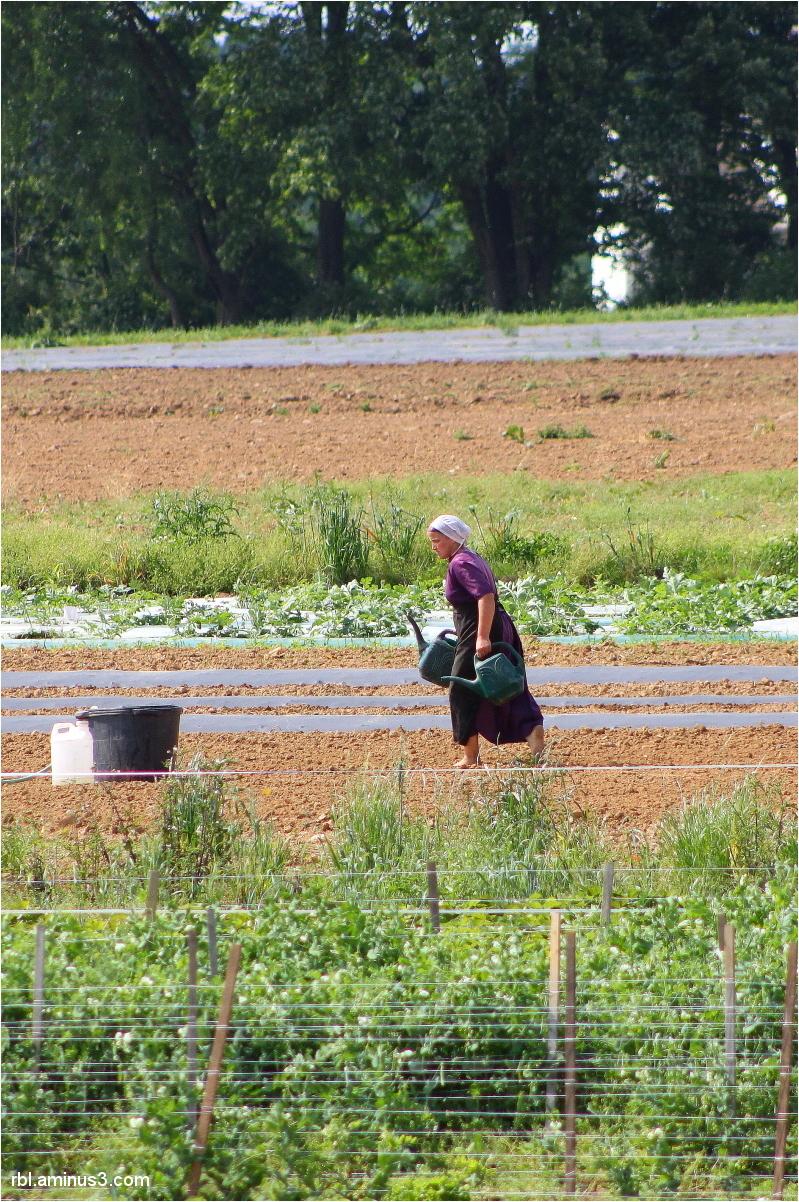 Crowl Toot Farm