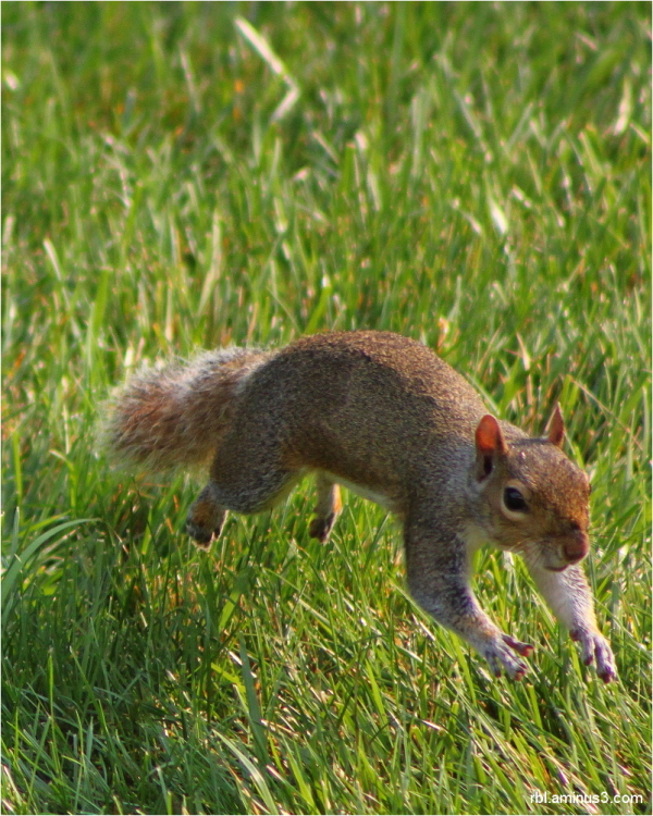 squirrel aminus3-theme
