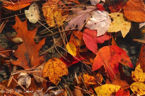 Leaves at the Octoraro Lake