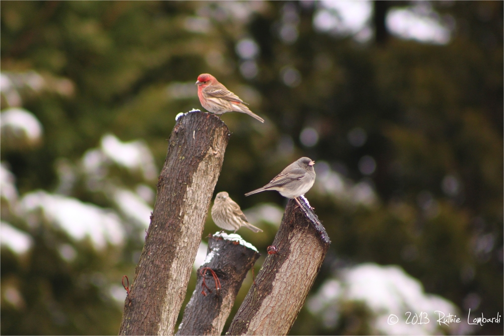 birds perched on tree in winter