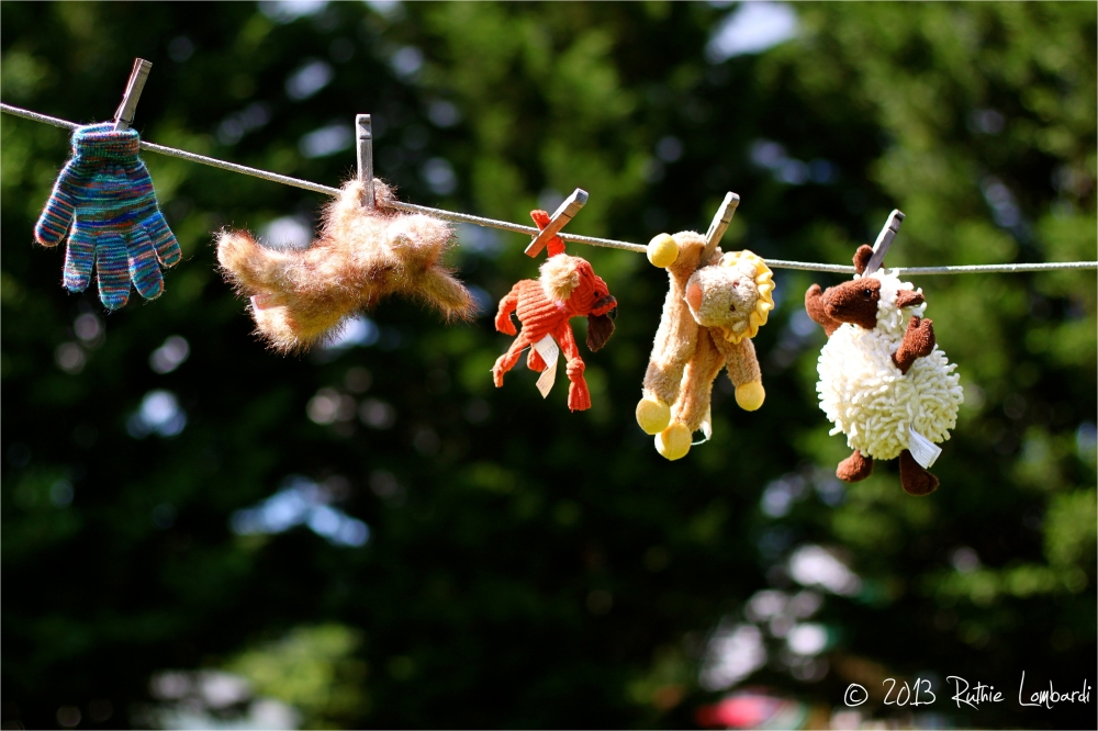 dog toys on clothes line