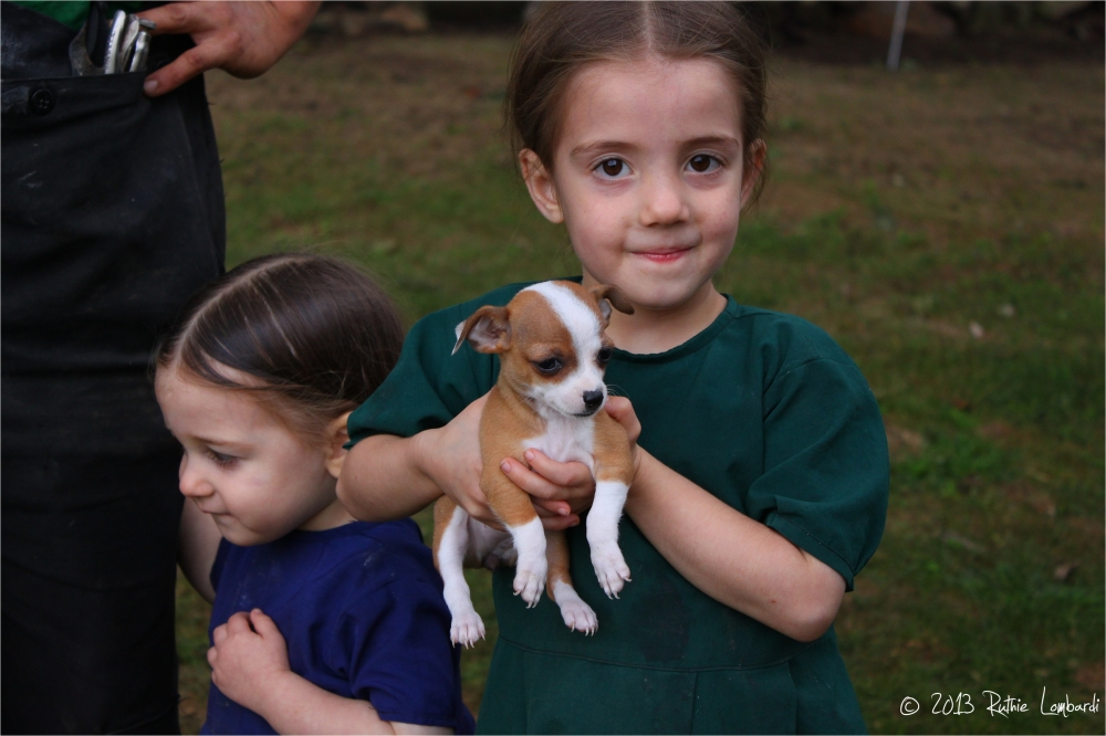 Amish girl with chihuahua