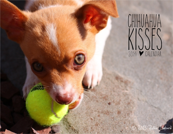 chihuahua kisses 2014 calendar cover