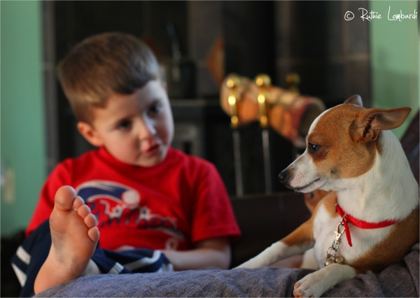 little boy with chihuahua