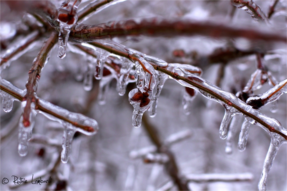 north east ice storm