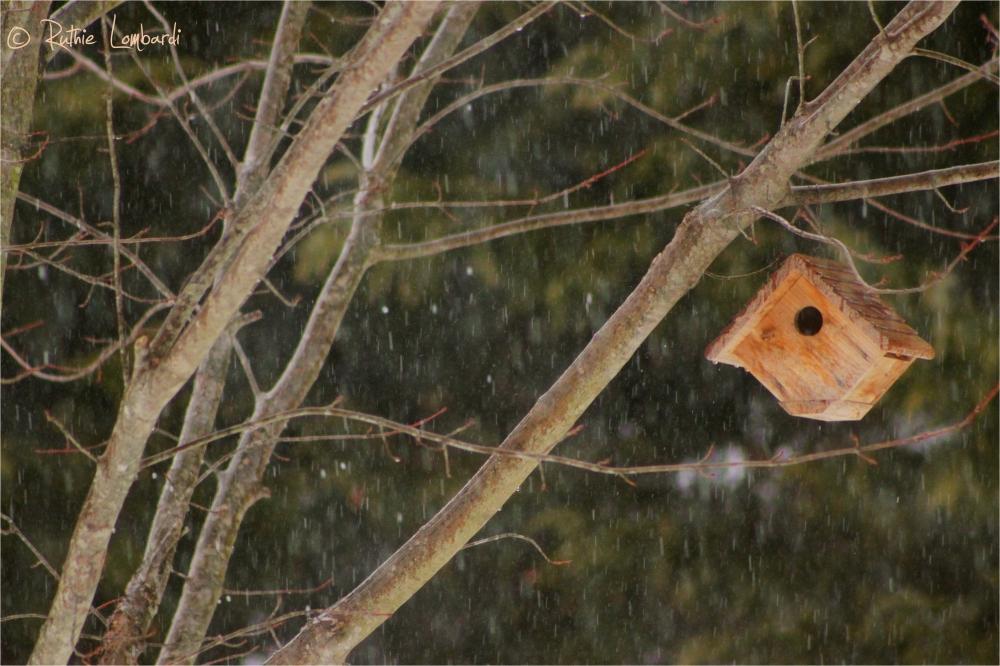 rain birdhouse