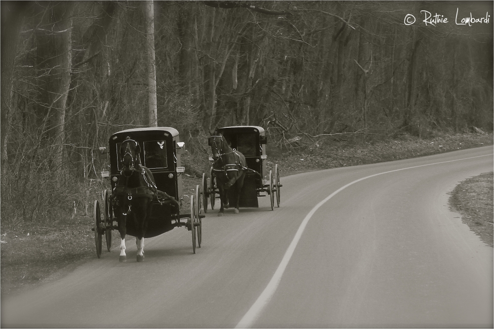 amish in oxford, pa
