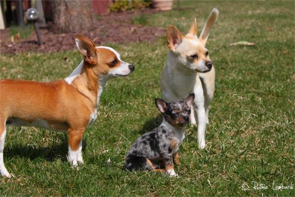 Clarabelle, Levi & Gunner