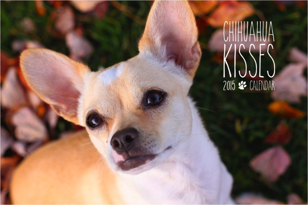 Chihuahua Kisses 2015 Calendar Cover