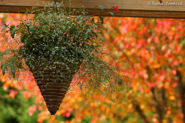 hanging planter in the fall