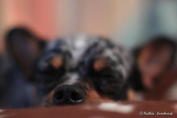 doggie nose