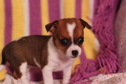 """""""Clementine"""" ~ The Puppy Diaries"""