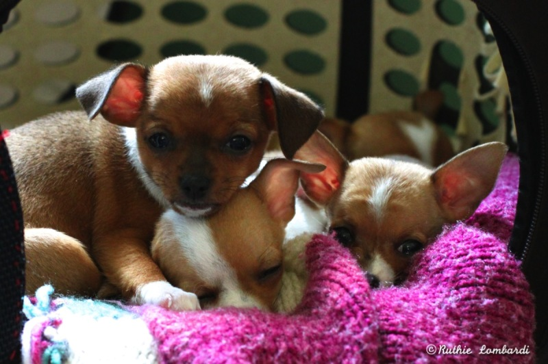 """""""Sisters"""" ~ The Puppy Diaries"""