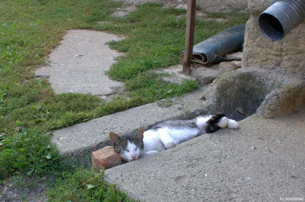 A lazy day