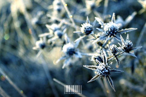 - Frozen -