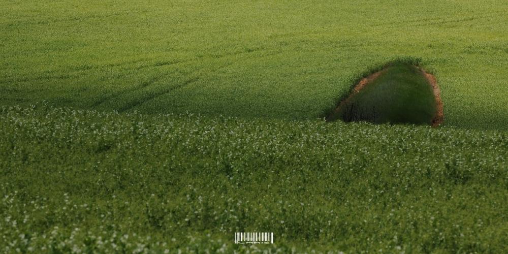 - Greenies -