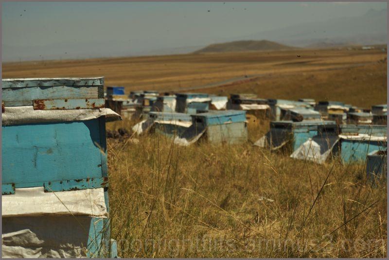 Comment faire du miel au bord de la route!