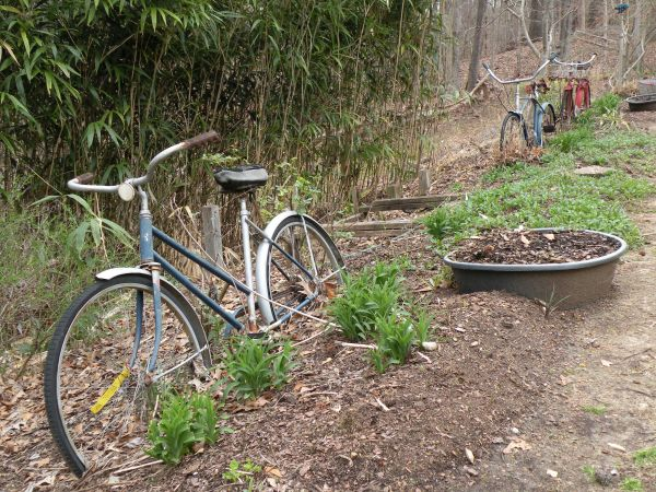 rooted bicycles