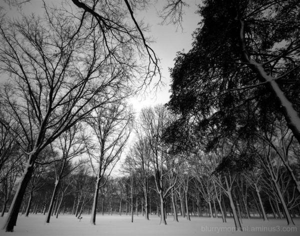 The Still of Winter