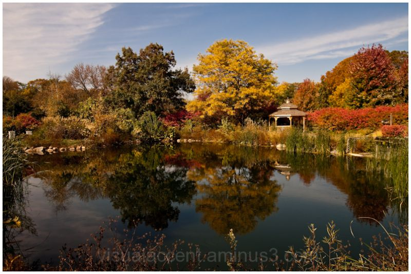Fall in Cantigny, Wheaton, IL