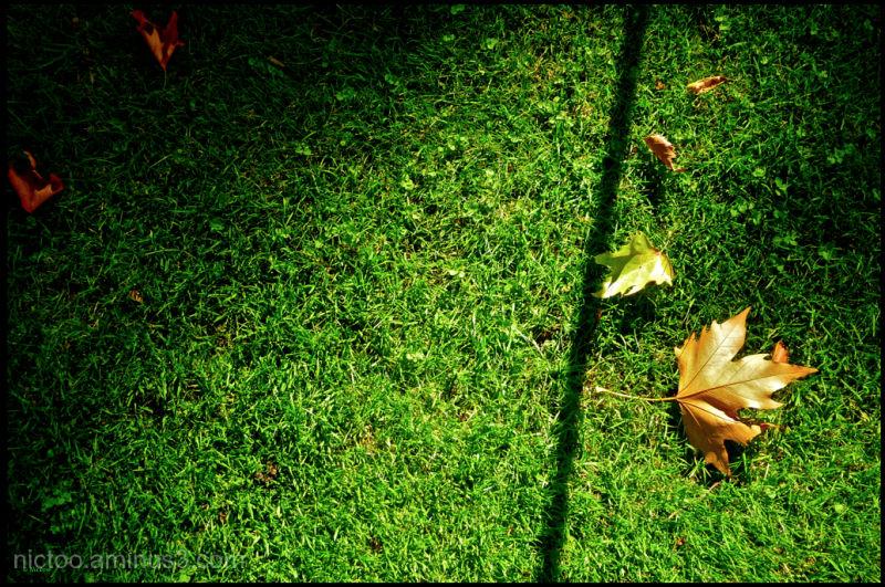 Une feuille sur la pelouse